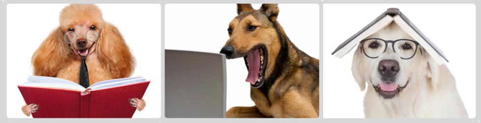 3-perros-estudiando