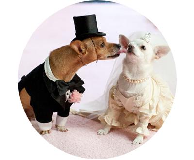 pareja-de-perros-chicos-redondos