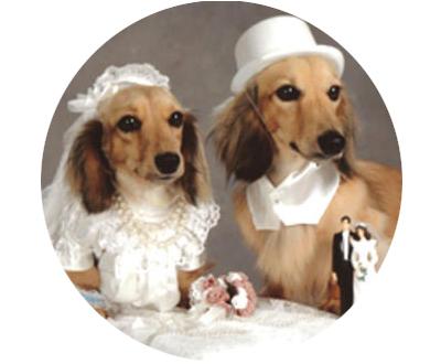 pareja-de-perros-redondo