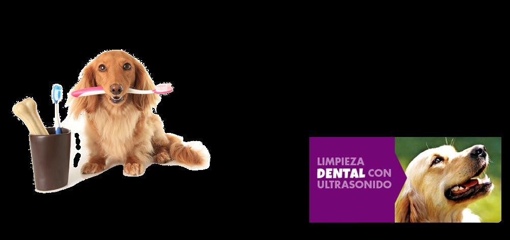 Limpieza Dental para tu Mascota